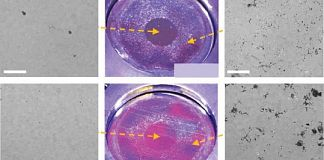 Radiation strengthens NiCr alloys